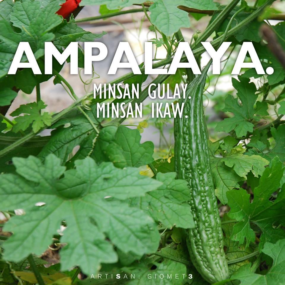 Ampalaya